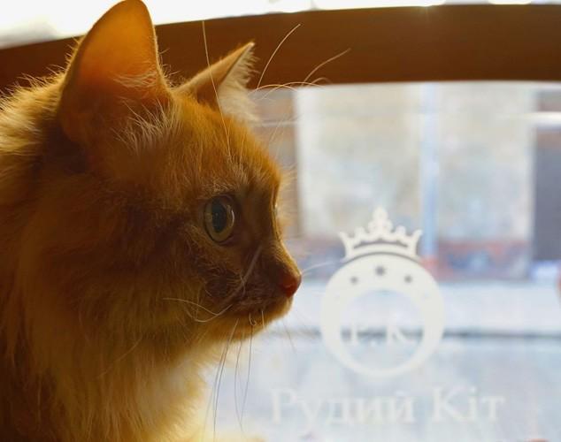 Наш талісман - кіт Фокс