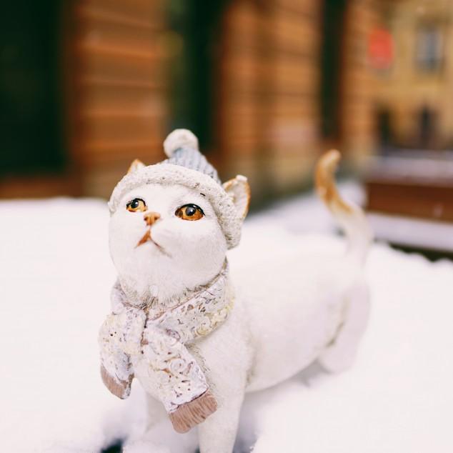 Зимовий котик